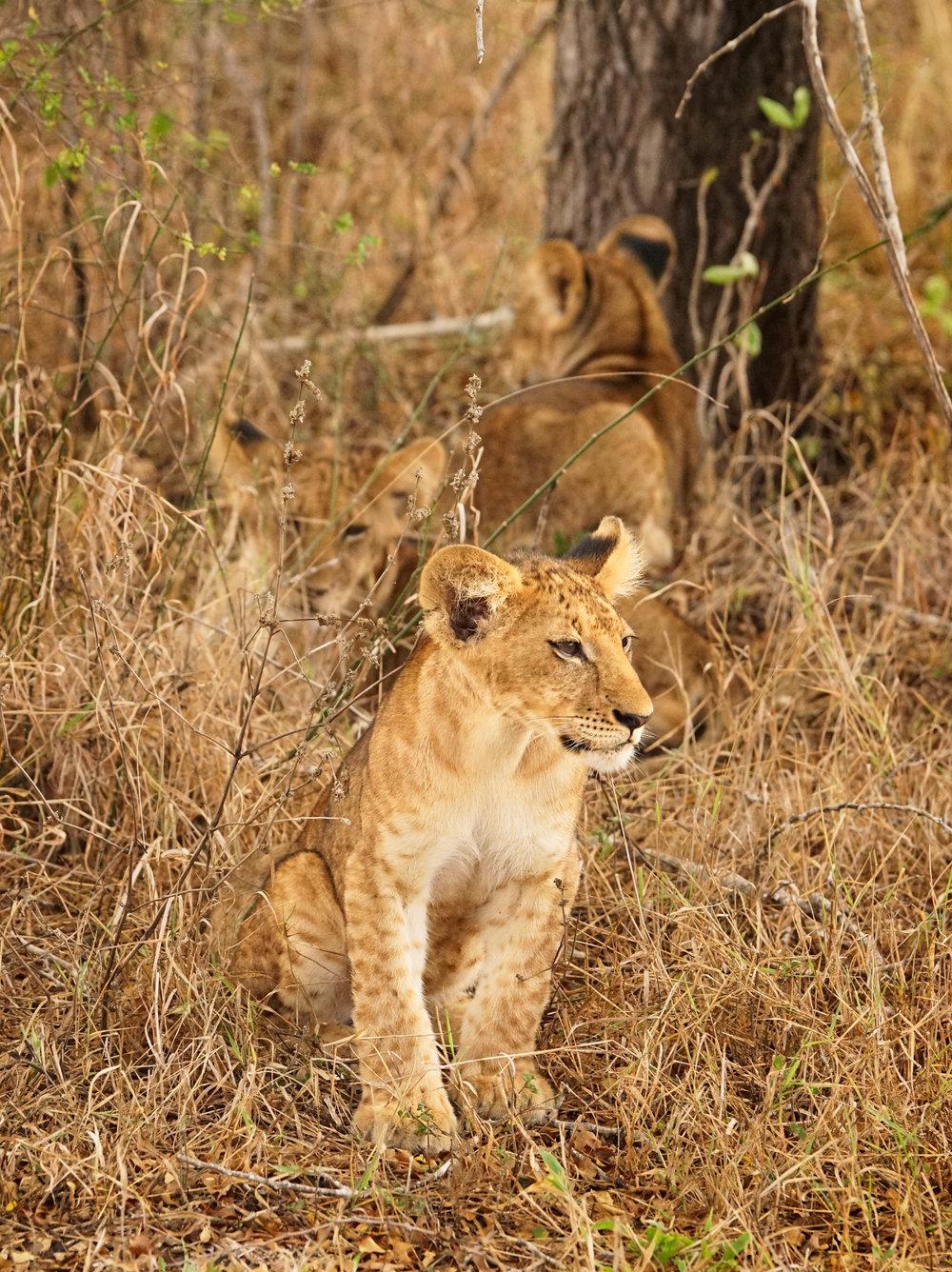 Tanzania18MG-4705-Edit.jpg