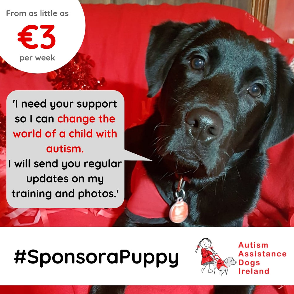 CLICK HERE to learn more about sponsoring a puppy -