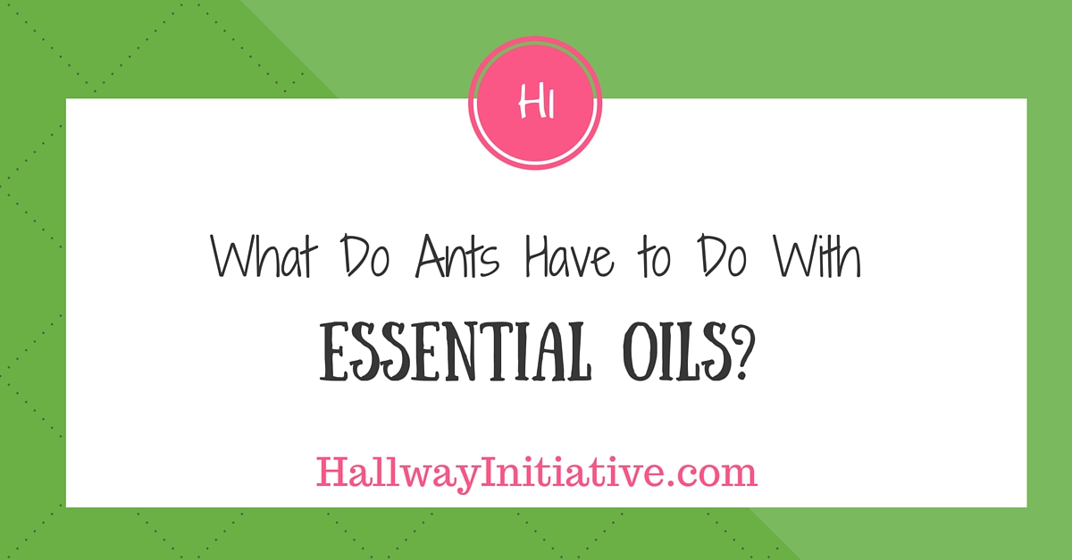 What do ants have to do with essential oils?