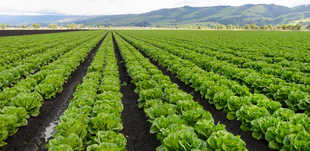 Startup reduz desperdício de vegetais em fazendas e obtém US$ 2 milhões de investimento