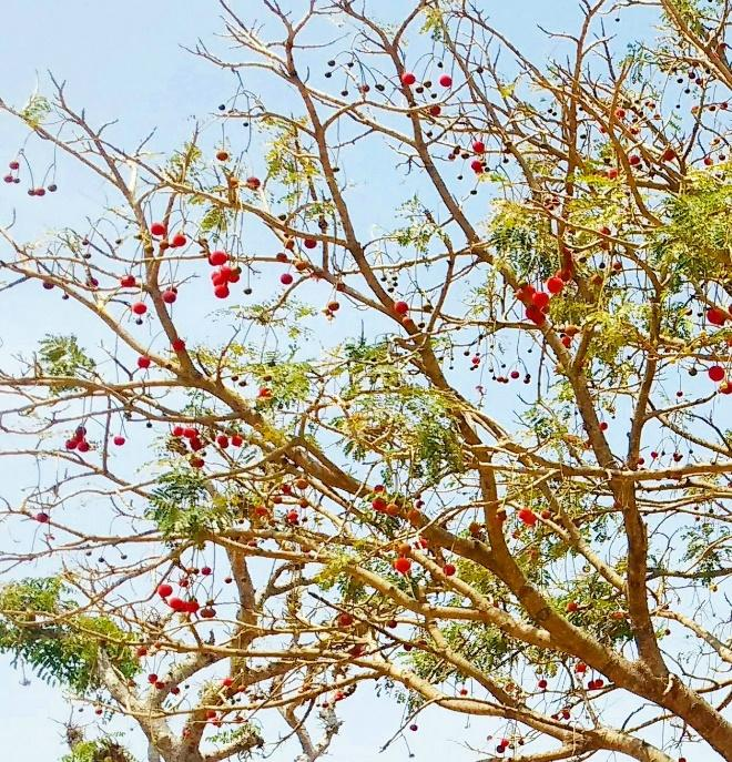 Gorgeous, unique tree in Niger State.