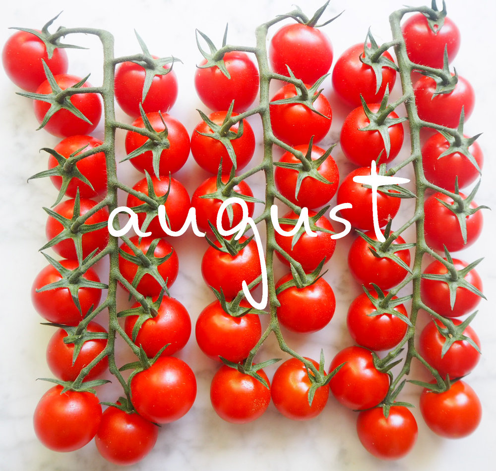 augusttomatoes120pttext.jpg