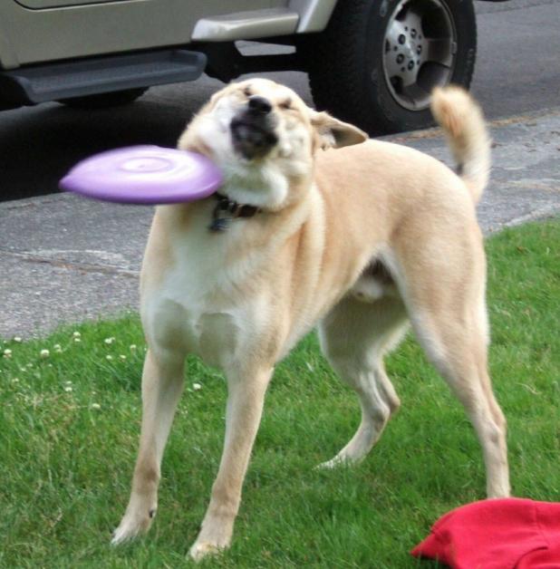 Dog-Frisby-Fail.jpg