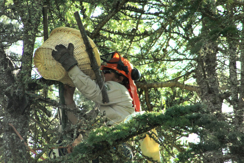 Substitute wicker basket nest being installed