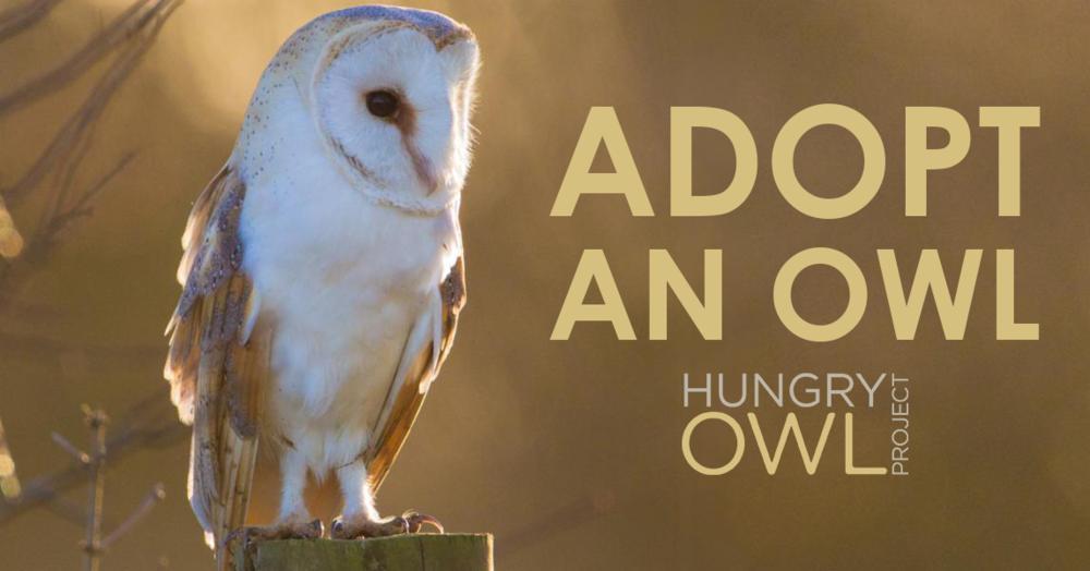 adopt-an-owl.png