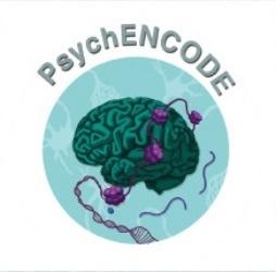 NIMH PsychENCODE