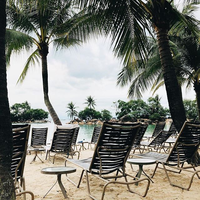 My December 1. ☺️ . . #travels #traveler #traveladdict #traveling #wheninasia #wheninsingapore #singapore #tourist #resort #longweekend #holidaytrip #palmtrees #instatravel #travelgram #instadaily