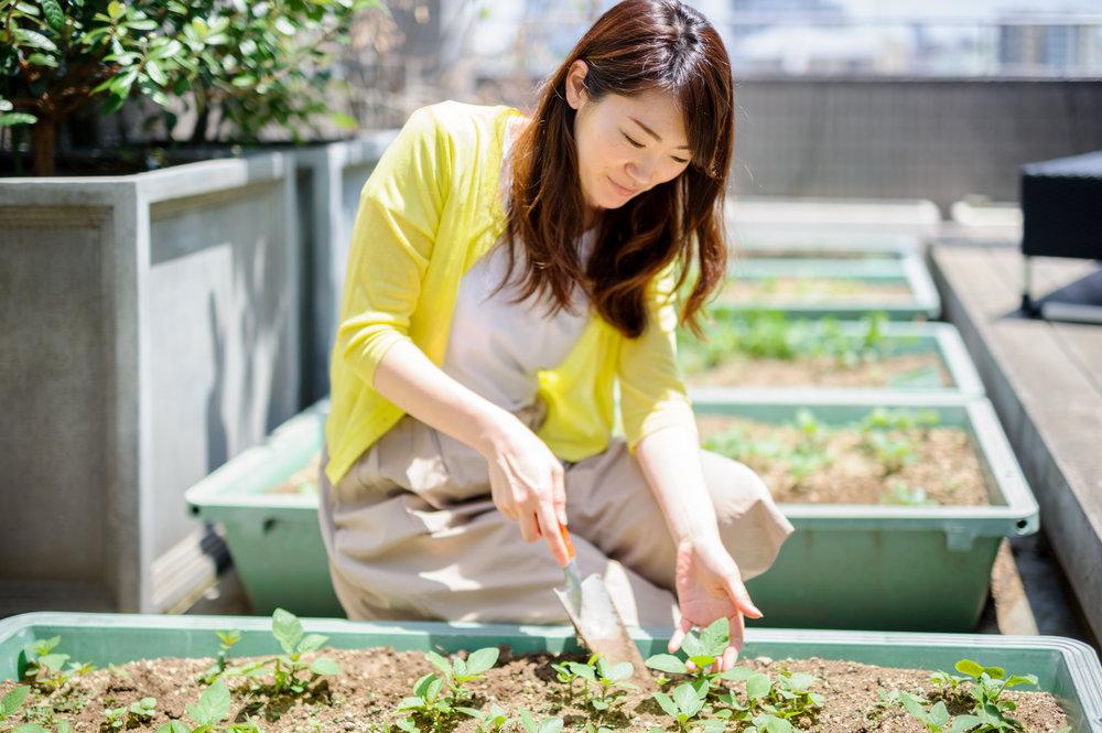 rooftop terrace gardening