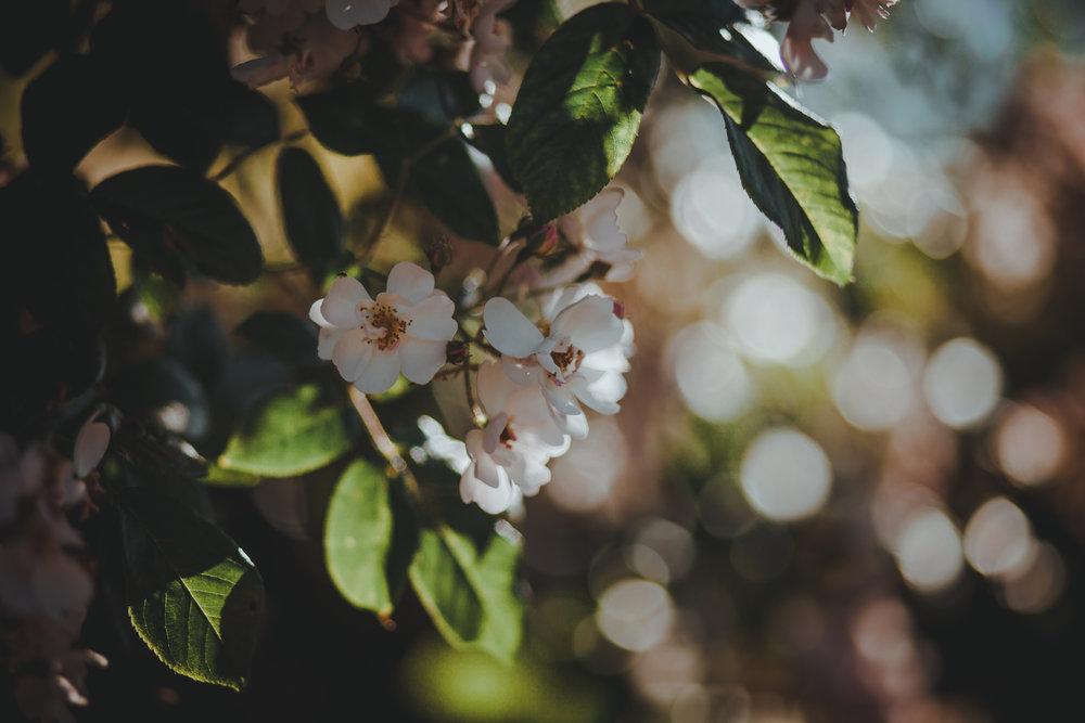 Spring Getaway 2.jpg