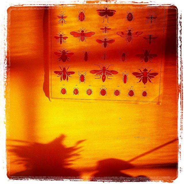 #morningcheers#lightandshadow#bugsteddybearandpineapple#coffeetime#tilltomorrow