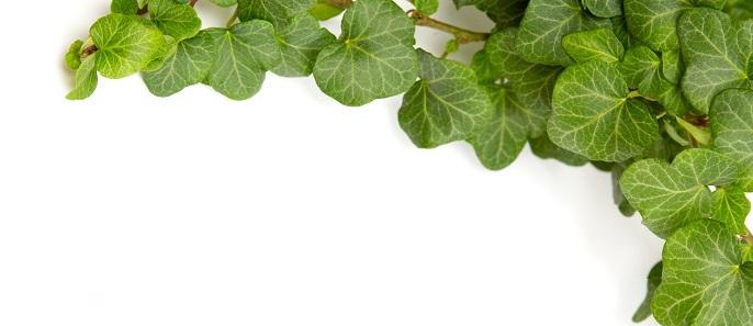 Las-plantas-trepadoras-y-el-Código-Civil1.jpg