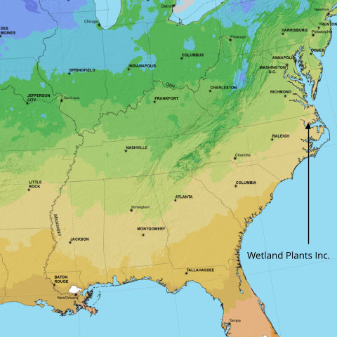 The genetic origin of our plants make them appropriate for projects in the medium and pale green (USDA Zone 7) and medium and pale tan (USDA Zone 8) areas of this map.