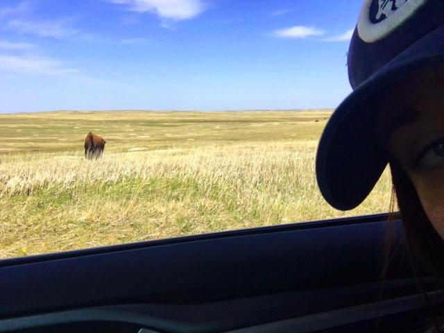 bison selfie! badlands national park, south dakota