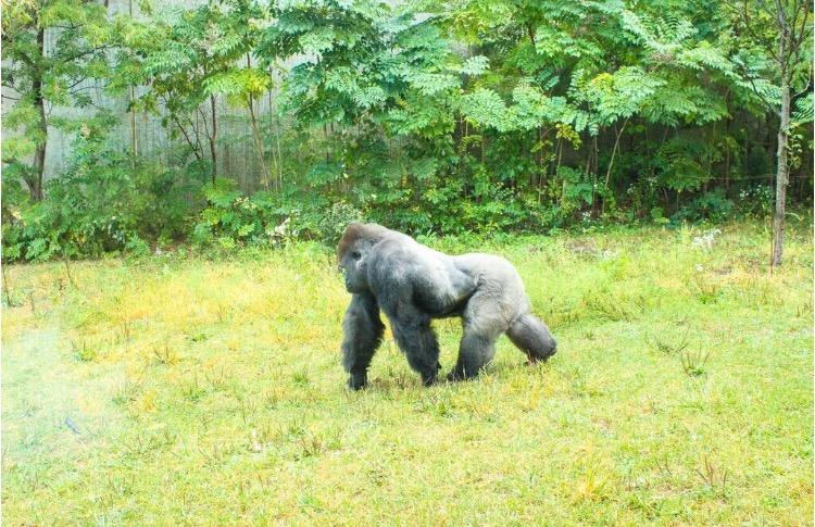 omaha-zoo-nebraska