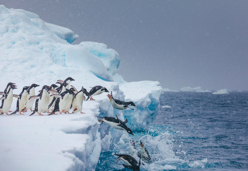 Photo Credit: Dave Merron for Quark Expeditions