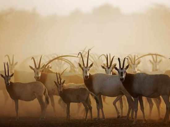 Wildlife-encounters-2-DSI_652.jpg