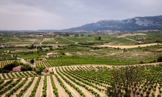 Rioja-countryside.jpg