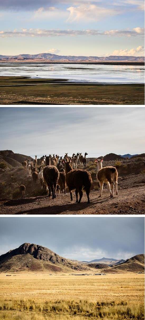 Altiplano1.jpg