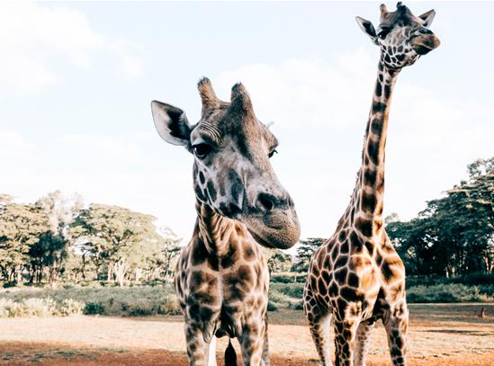 2-giraffe.jpg