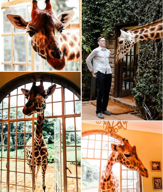 Giraffe-collage.jpg