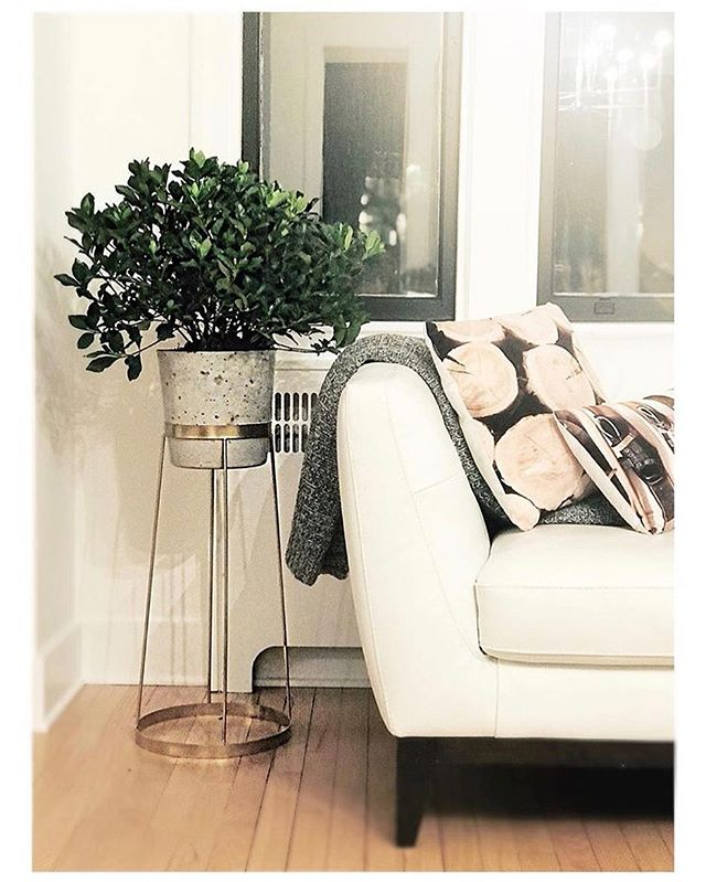 ✨GIVEAWAY✨ (Go to @diymom.ca to enter)  Did you know that houseplants make you smarter?! According to a recent study, vegetation isn't just good for your belly, it's good for your mind. Research suggests the mere presence of plants can boost your attention span and a simple change in decorating can reap huge health benefits! What great news… Especially since I have just gone plant crazy and filled my house with what I assumed was just a cure for the winter blues! 🌿 So to boost your mental health in the middle of February, I've teamed up with some amazing local resources to put together a mind altering prize pack! 🌿 Win this glorious gold plant stand by @wickwooddesign a custom made concrete pot by @concreteiscool and a gorgeous gardenia bush from @indiemercantile 🌿 ENTER TO WIN: 1. Like this post 2. Follow @diymom.ca @indiemercantile @concreteiscool & @wickwooddesign  3. Tag a friend that would love to bring the outdoors in, this winter. (the more unique tags the more entries) BONUS ENTRY: share and tag us in your stories 🌿 Contest closes Sunday February 18th 8pm AST *this giveaway is in no way affiliated with instagram *winner must be able to pick up the prize in HRM… cause it's damn heavy!! . . . #giveaway #plantstand #plants #indooroutdoor #indoorplants #plantmakeyousmart #interior #interiodecor #interiordesign #decor #homedecor #home #halifax #halifaxgiveaway #halifaxmagazine #housebeautifulmagazine #houseandhome #styleathome #renovation #renovationtvshow #diymom #diyhomedecor #wintertrends #myhome #mystyle #concretepot #concrete #gardenia #gardeniabush