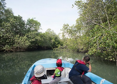 Boat Tours - Floating Fish Farm or Mangroves - Click HERE to sign up now!
