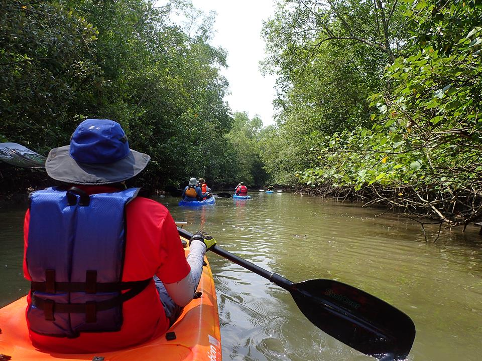 Kayaking - Day or Night - Click HERE to sign up now!