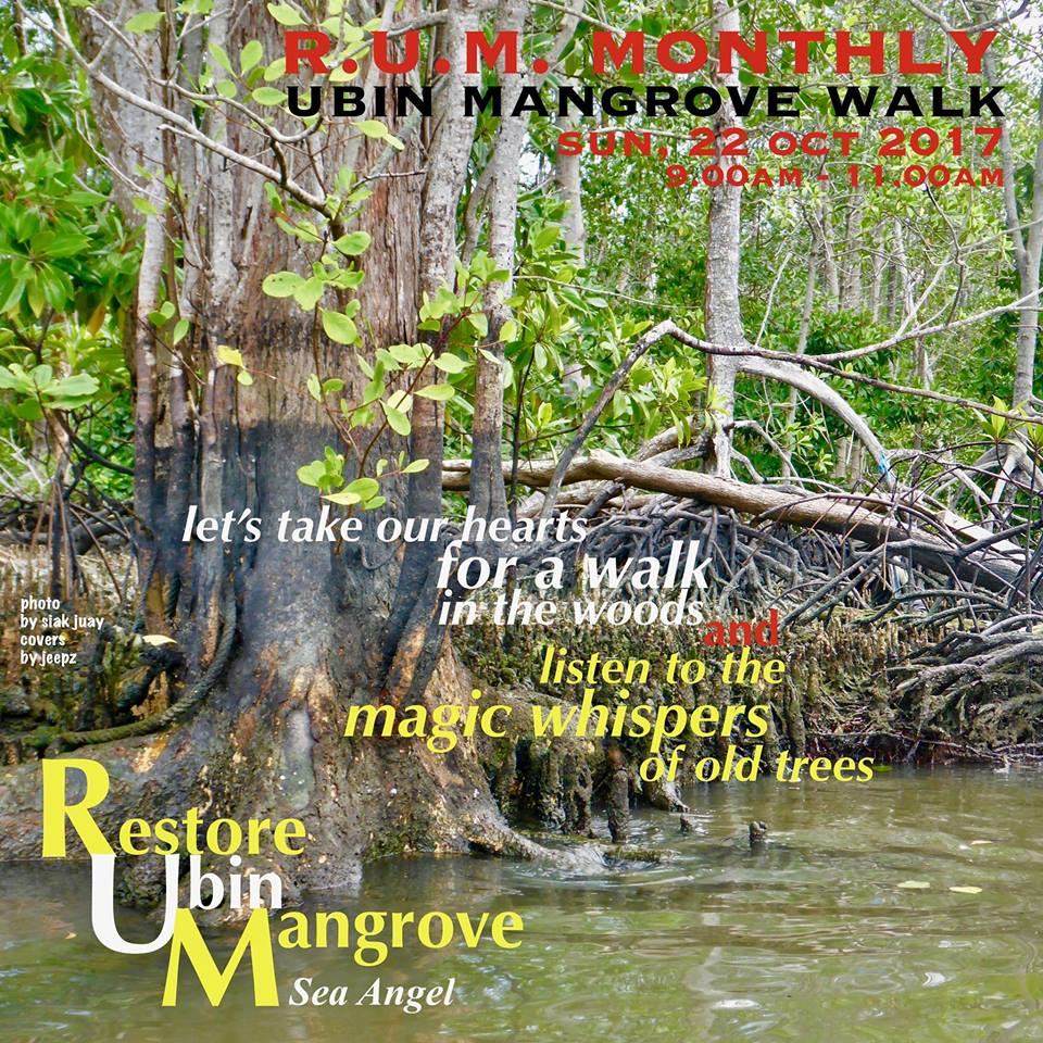 "Sea Angel RUM Monthly Ubin Mangrove Walk Date: Sun 22 Oct 2017 Time: 9am - 11am ""Let's take our hearts for a walk in the woods and listen to the magic whispers of old trees"" The community of Sea Angel & the folks at R.U.M. (Restore Ubin Mangrove) brings to you the 1st edition of the monthly mangrove introductory walk at Pulau Ubin on Sun, 22 Oct 2017, from 9.00am to 11.00am. Join us for a walk in the majestic old mangrove forest of Pulau Ubin & learn about the very important part that mangrove plays in our eco system & marine environment. Open for all age groups, children below 12 must be accompanied by parents. Easy leisure walk on flat ground & village tracks. The walk is on, rain or shine. Registration is required for all participants. Book your place now by filling in the following form to complete the registration & we will get in touch with you on the itinerary & walk details.  For further queries, drop us an email at ubinseaangel@gmail.com. Please note that this free walk is conducted by volunteer guides & facilitators"