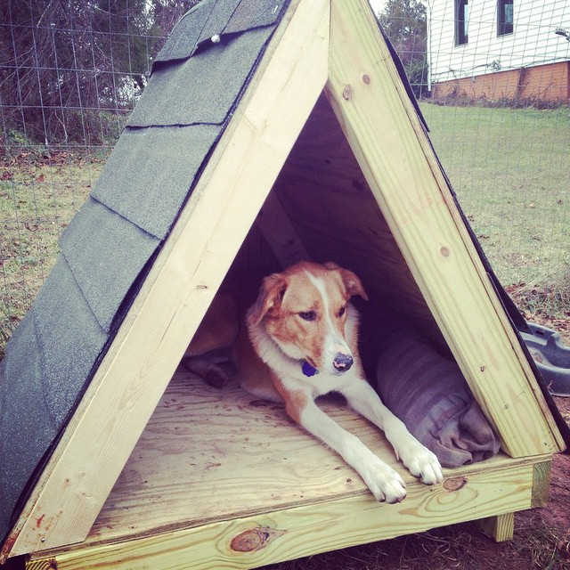 Gracie has a little dog house, but her favorite place is wherever the humans are.