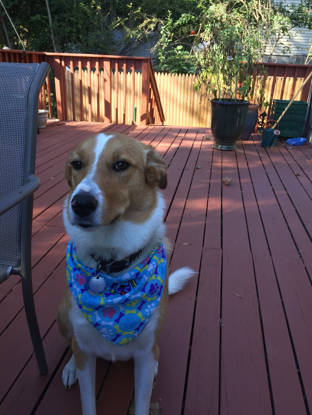 We've tried out the bandanna look this past year. I think it suits her.