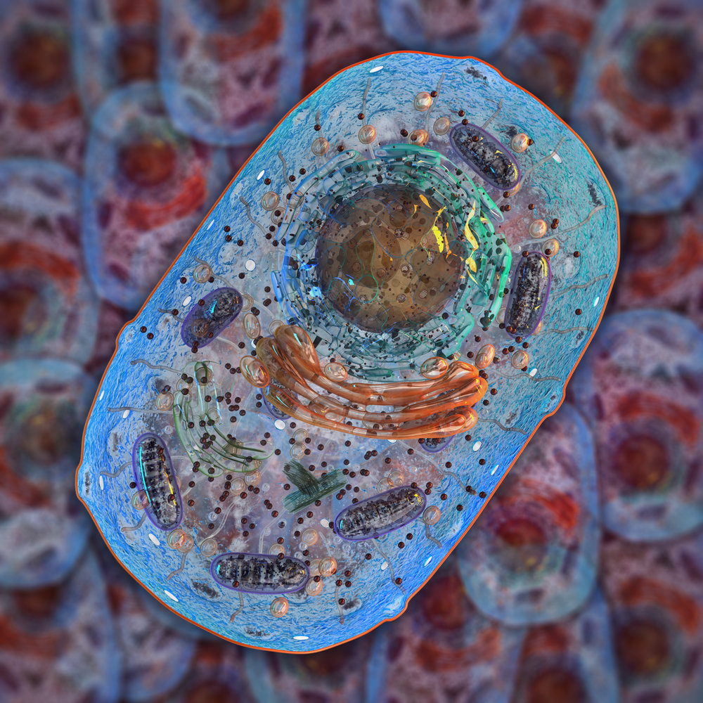 Healthy mitochondria are key to cellular energy