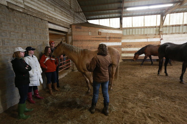 Kim Waltman equine guided education session earlham iowa