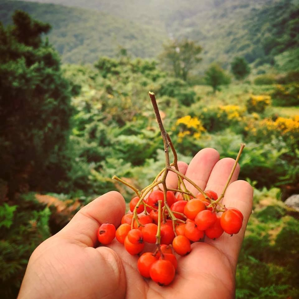 autumn foraging.jpg