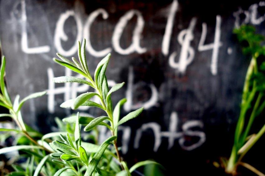 local-herbs-small-food.jpg