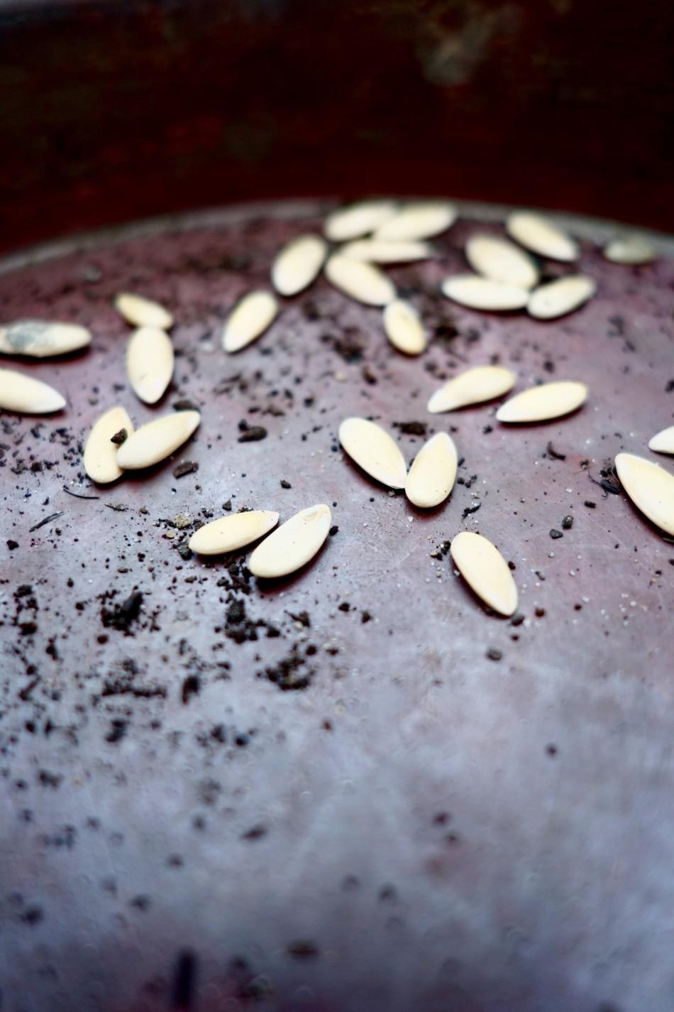 seeds-small-food.jpg