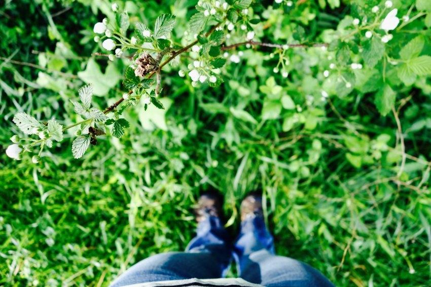 berries-see.listen.be_.jpg