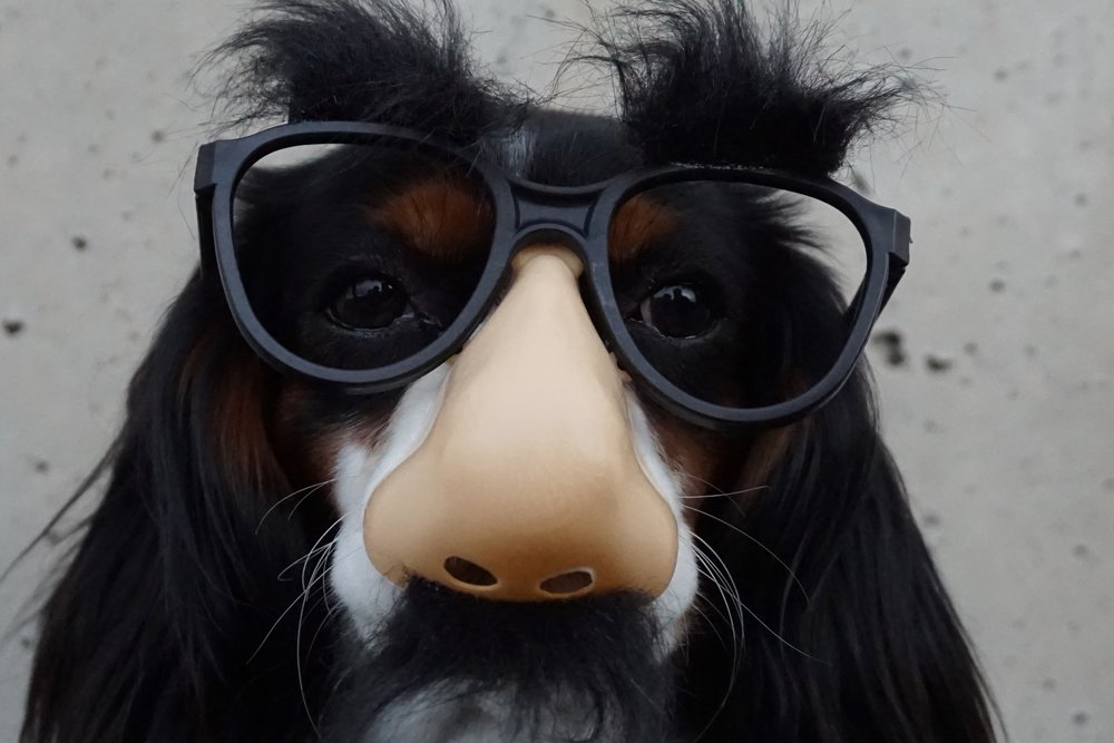 dog glasses