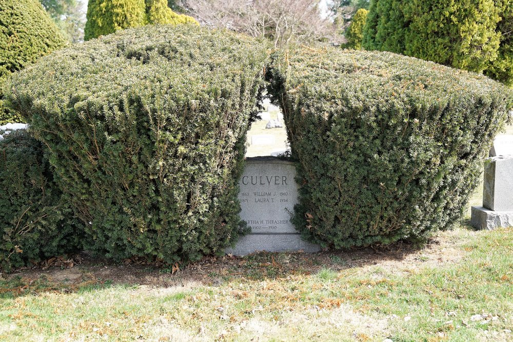 All shrubbery here is kept trimmed. These probably got a little too big. - Arlington Cemetery, Drexel Hill, PA.