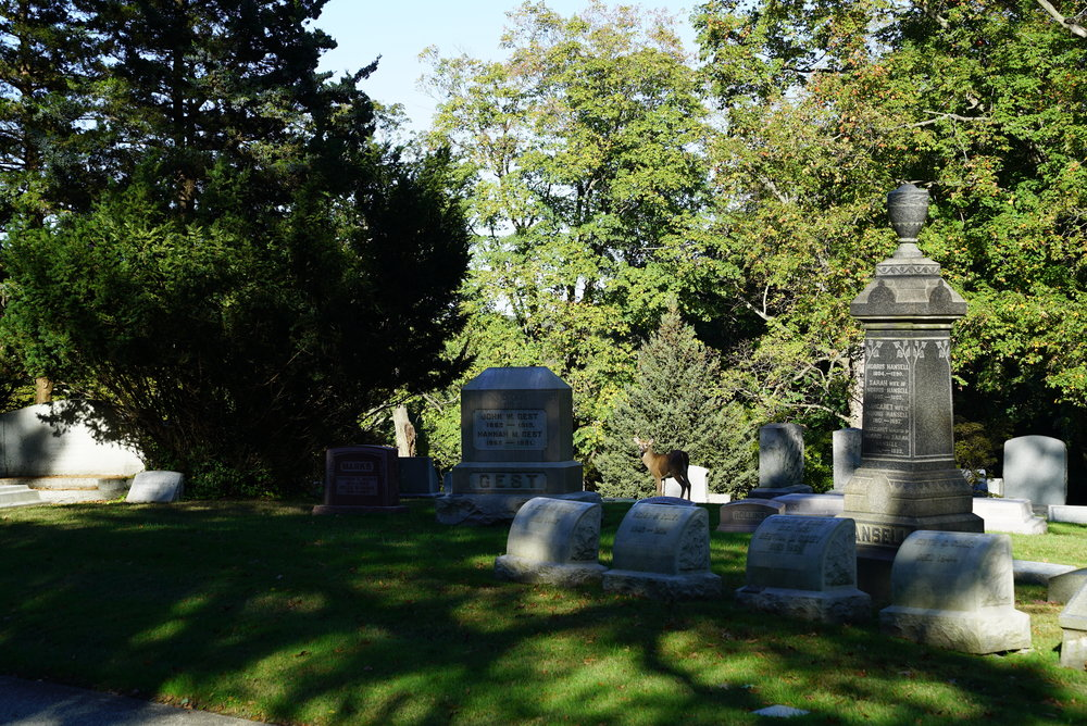 See the deer? With the antlers? He was watching me. West Laurel Hill Cemetery. Bala Cynwyd, Pennsylvania.