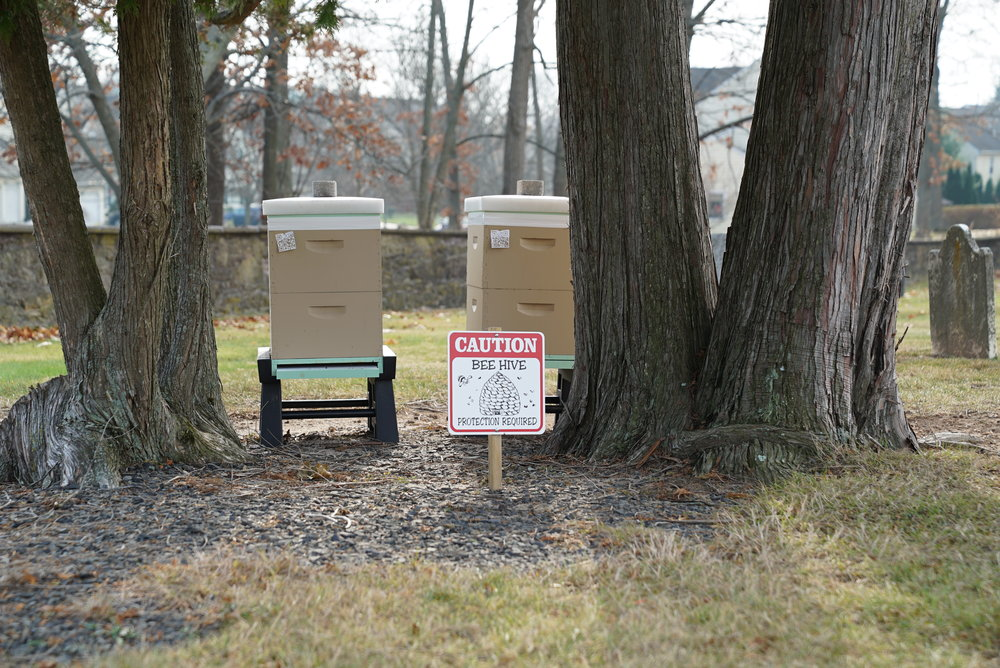 An unusual site at a cemetery: colonies of honey bees. Doylestown Mennonite Church Cemetery, Doylestown, Pennsylvania.
