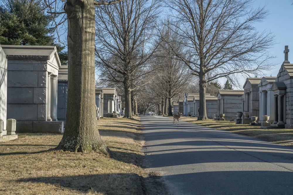 Holy Cross Cemetery. Delaware County, Pennsylvania. February 16, 2019.