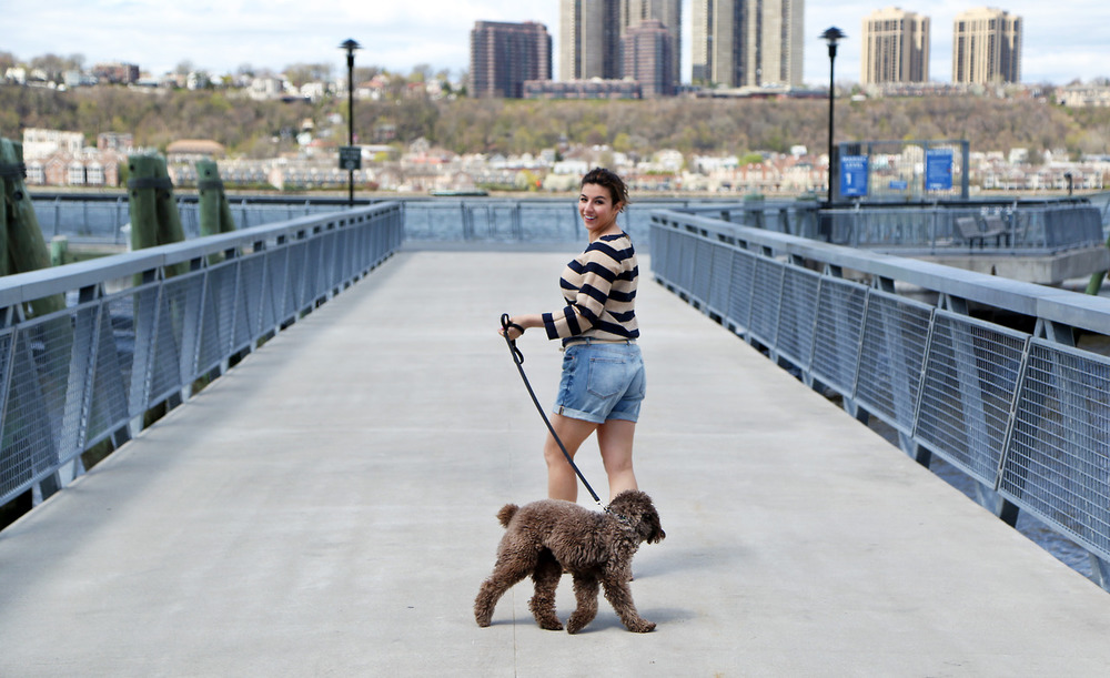 Meet Chewie the cockapoo and his partner in crime Megan of  ProfessionGal  and Cowagger Sitters!