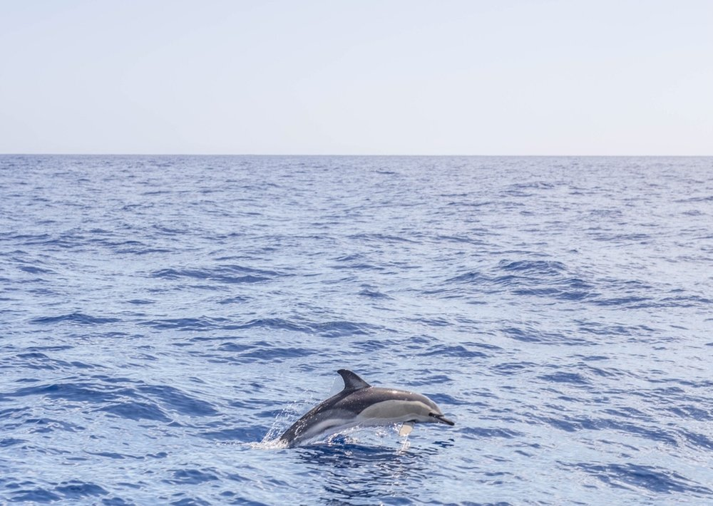 Dolphin watching  - You won't believe how many photos we took to capture this! They are so fast