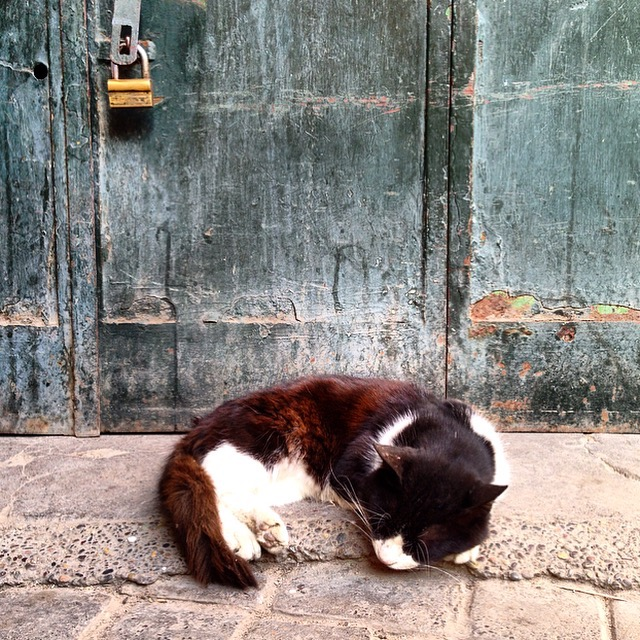 Cats of Marrakesh