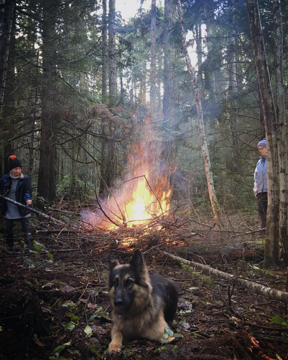 lands projects - Galiano Cabin - clearing.jpg