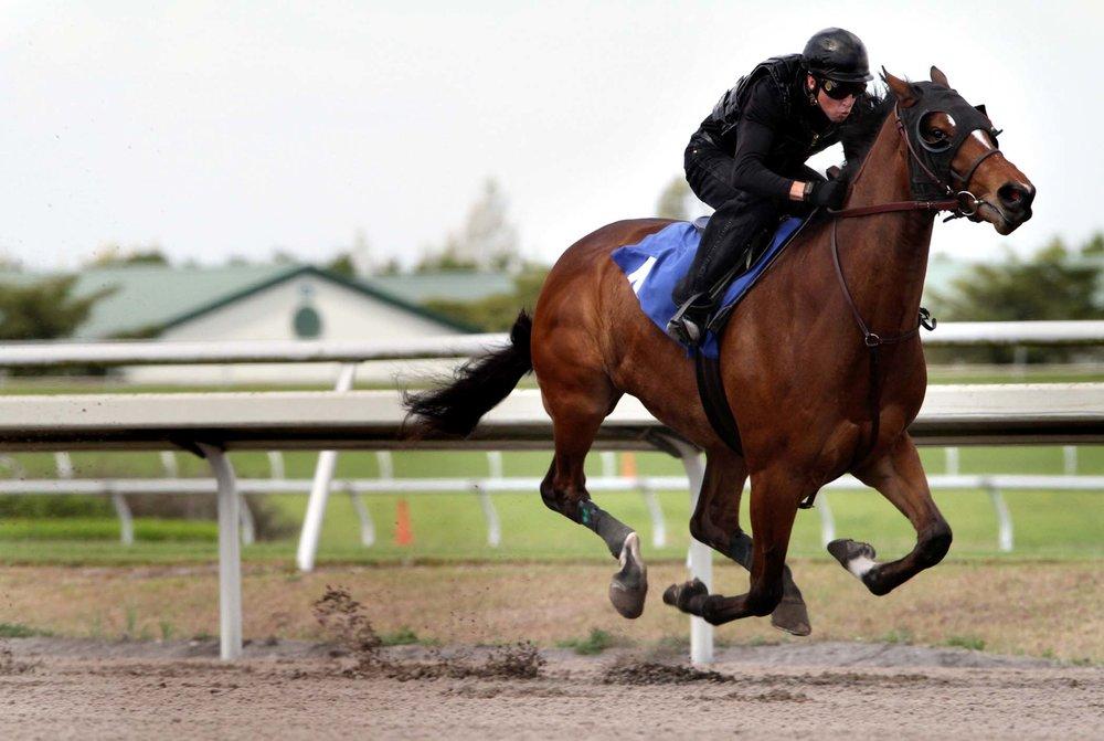 horse-4.jpg