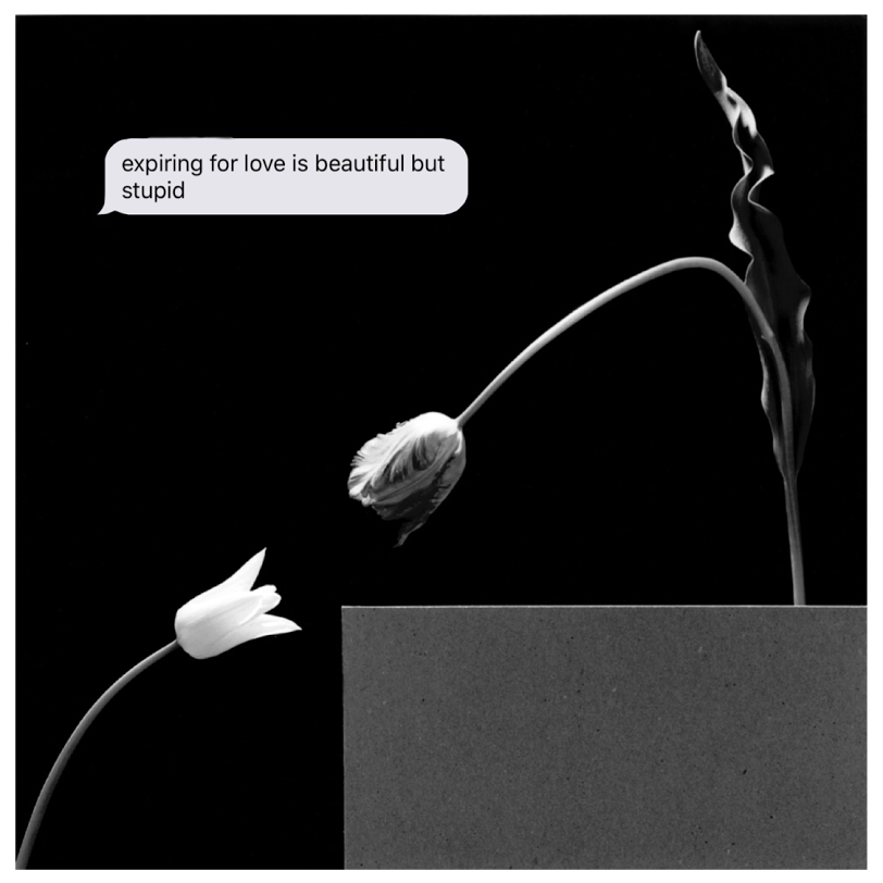 "Expiring   Robert Mapplethorp ""Two Tulips"" & Jenny Holzer quote. Archival Digital Print.  2018 1:1"