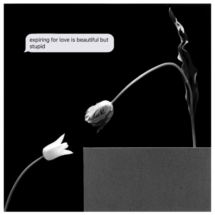 EXPIRING  Robert Mapplethorpe - Tulips & text message.    digital collage.  2018 1:1