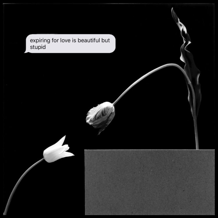 EXPIRING  Robert Mapplethorpe - Tulips & text message.    digital collage.  2018 1:1
