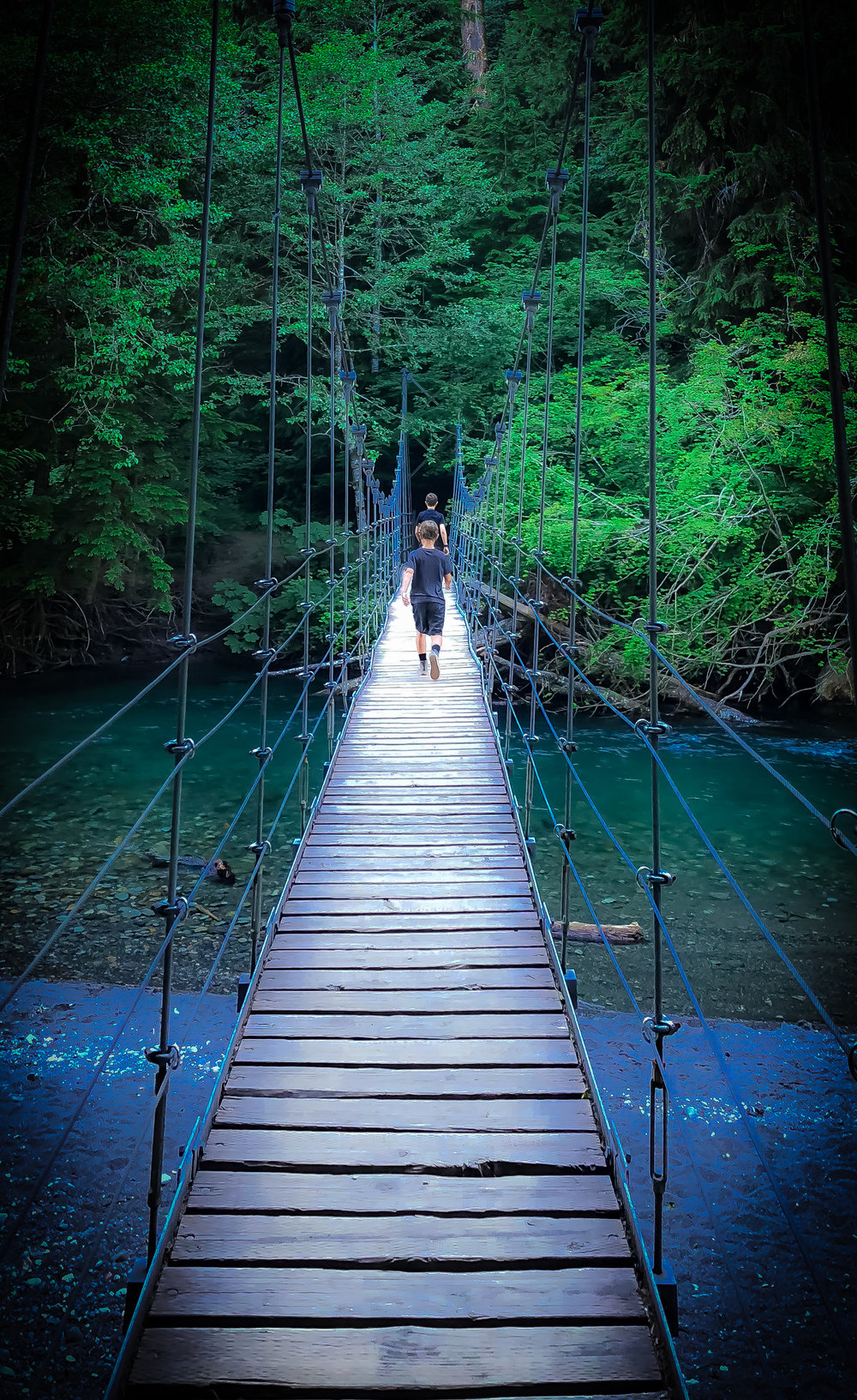 Suspension Bridge / Patriarch Grove / Mt. Rainier